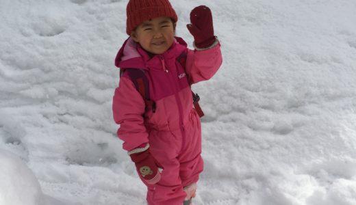 【たのしい米原】東草野・甲賀で雪掘り野菜体験に参加してきました。